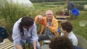 "Pullman Memorial's environmental public witness contingent visited Fruition's organic seed farm down in Naples, NY at the end of August 2014. Pictured, longtime member Alan Nugent harvests tomato seeds surrounded by fellow ""pulpers"" member Darrell Dyke and his family."